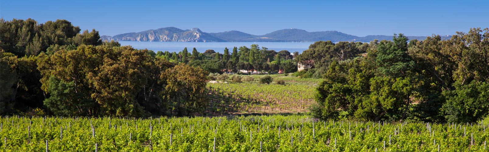 vin-chateau-bormettes-slider-6