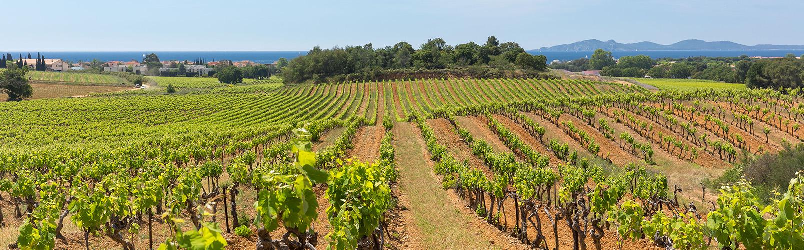 vignes-chateau-des-bormettes